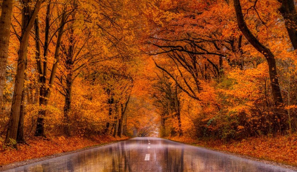 Equinócio de outono: Aprenda a fazer poderosos rituais durante este fenomeno