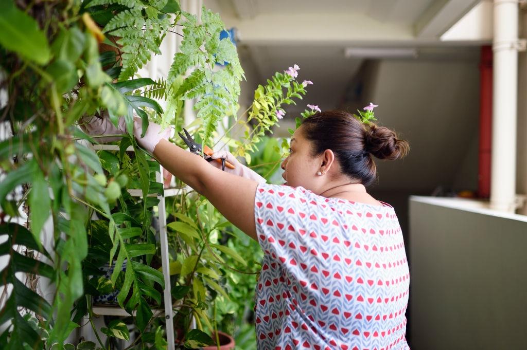 7 dicas para ter sua própria horta em casa ou apartamento