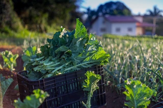 5 motivos para consumir alimentos orgânicos