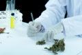 Falta de informação prejudica terapias com cannabis medicinal no Brasil